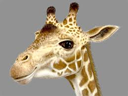 Avatar de girafe21