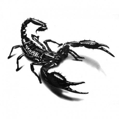 Avatar de calou59