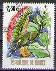 Timbre: Combretuni grandiflorum (1ex)