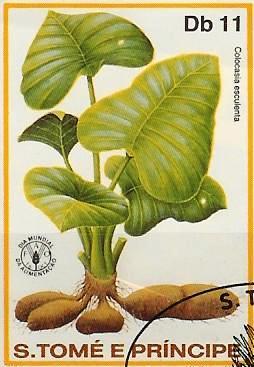 Timbre: Colocasia esculentia