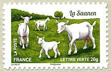 Timbre: Chèvres : La Saanen (OVP)
