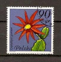Timbre: Fleurs de cactus