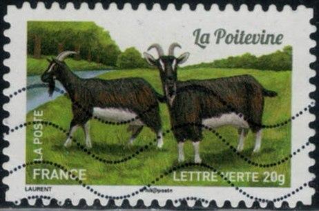 Timbre: Chèvres : la poitevine