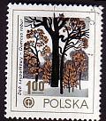 Timbre: English oak (Quercus robur)