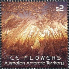 Timbre: Ice Flowers