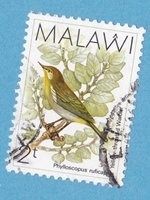 Timbre: Oiseau, phylloscopus