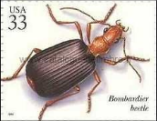 Timbre: Brachinus sp.