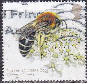Timbre: Abeilles - Northern Colletes Bee