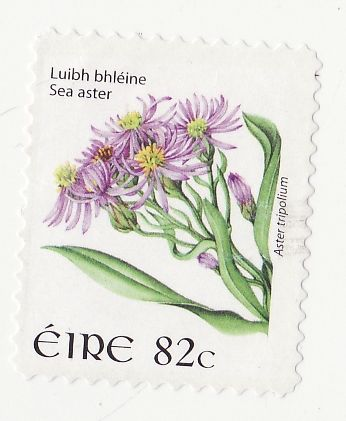 Timbre: Aster des mers - Tp adhesif sur fragment