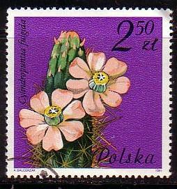 Timbre: Fleur de cactus : Cylindropuntia fulgida