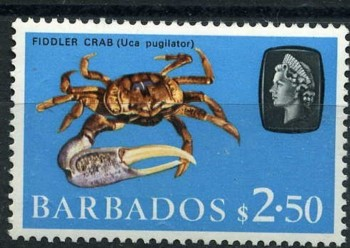 Timbre: Crabe uca