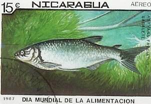 Timbre: Atractoteus tropicus