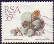 timbre: Dinteranthus wilmotianus
