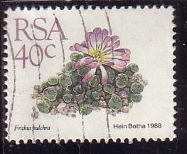 timbre: Frithia pulchra