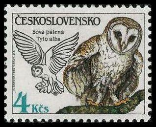 timbre: Tyto alba