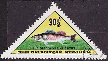 Timbre: Lucioperca marina cuvier