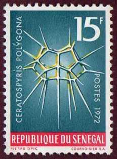 Timbre: Ceratospyris polygonia