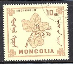 timbre: Ribes nigrum