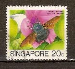 Timbre: Xylocopa caerulea