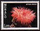 Timbre: Faune méditérranée - Actinia  equina