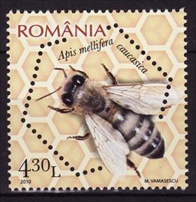 Timbre: Caucasian honey bee (Apis mellifera caucasica)