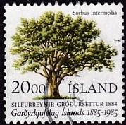 Timbre: Sorbus intermedia
