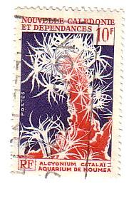 Timbre: Alcyonium caraba