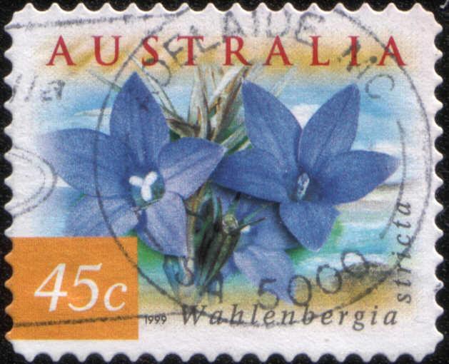 Timbre: Fleurs Wahlenbergia stricta, adhésif dents pointues