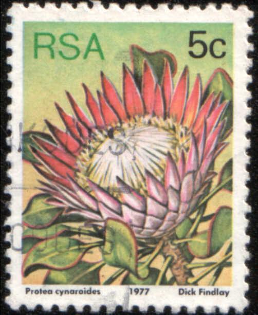 Timbre: Protea cynaroides