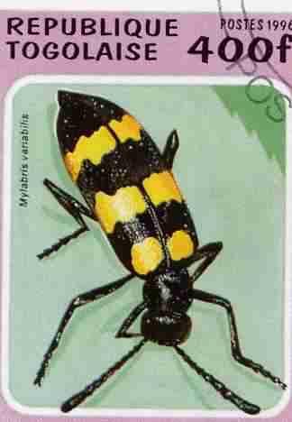 Timbre: Mylabris variabilis