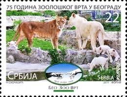 Timbre: Lion (Panthera leo)