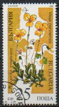 Timbre: Viola perinensis