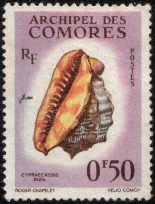 Timbre: Coquillage Cypraecassis rufa