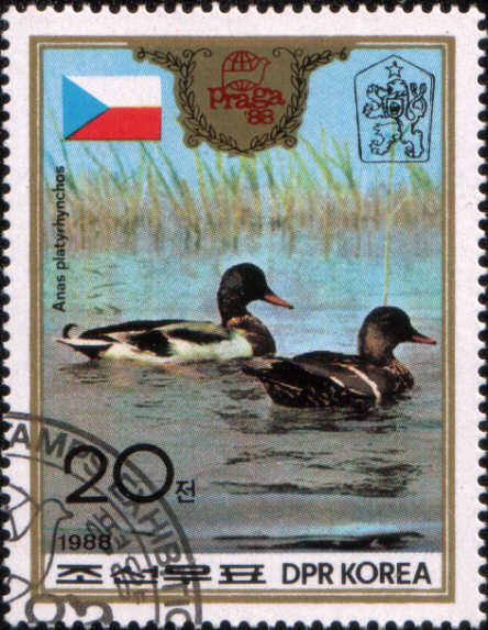 timbre: Mallard (Anas platyrhynchos) Canards colverts