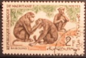 timbre: Singes